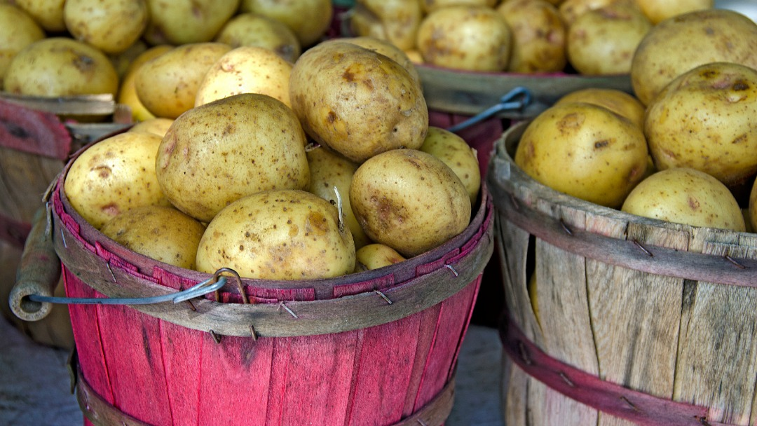 The hunt for the perfect potato (TVO.org)
